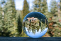 Thick Grove of Pine Forest Captured in Globe Reflection. Grove of pine trees in California forest captured in glass ball reflection close up royalty free stock image