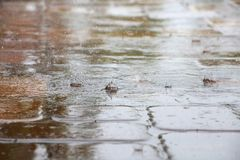 Raindrops Splattering on Pool Deck Tiles. Thick, heavy raindrops splatter on the tiles of a pool deck in a warm, humid afternoon in late June in Florida Stock Photography