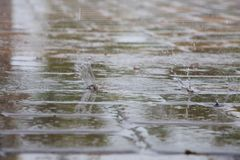 Raindrops Splattering on Pool Deck Tiles Royalty Free Stock Photography