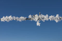 Thick hoar frost on fence wire. Royalty Free Stock Image