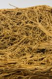Thick interlacing of roots Royalty Free Stock Photos
