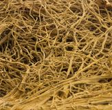 Thick interlacing of roots Royalty Free Stock Photography