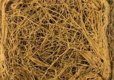 Thick interlacing of roots Stock Image
