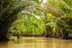 Thick jungle in Mekong delta, Vietnam. Thick jungle in Mekong delta in Vietnam Royalty Free Stock Image