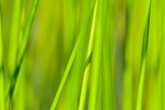 Background of seagrass closeups macro. Thick lake grass at beautifully located lake in Sweden macro closeups sunny day stock photo