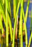 Background of seagrass closeups macro. Thick lake grass at beautifully located lake in Sweden macro closeups sunny day stock images