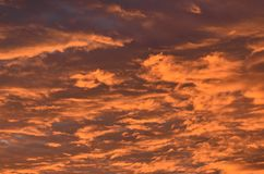 Dramatic cloudscape under sunset light. Thick layer of clouds beautifully colored in red hues by sunset light royalty free stock image