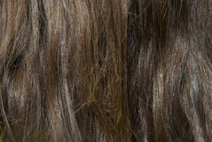 Thick Luxurious Brown Hair Closeup. Detail of a woman's thick chesnut brown hair that is slightly wazy Royalty Free Stock Photo