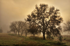 Thick mist at the farm, South Africa Royalty Free Stock Photo