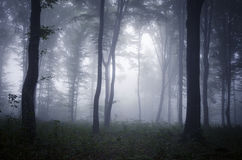 Thick mist trough trees in mysterious forest Stock Photography