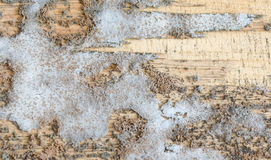 Thick mold texture on wood Stock Photography