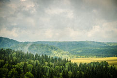 thick morning fog in the summer forest Royalty Free Stock Photography