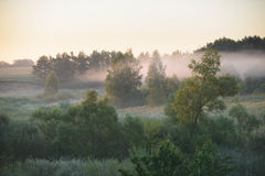 Thick morning fog in the summer forest. Royalty Free Stock Photography