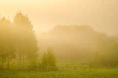 thick morning fog in the summer forest. Stock Image