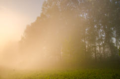 Thick morning fog in the summer forest. Royalty Free Stock Photo