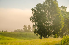 Thick morning fog in the summer forest Stock Photo
