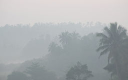 Thick morning fog in tropical palms jungle Royalty Free Stock Photos