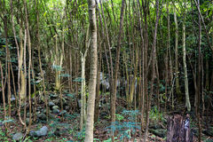 Thick rainforest Stock Images