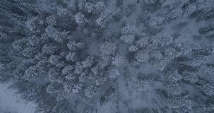 Siberian winter forest in Russia, taiga 2