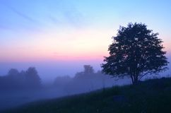 Thick summer morning fogs. Tree on the hill in the fog Stock Images