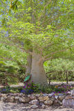 Thick tree with green leaves and flowers in garden bed Royalty Free Stock Photography