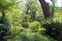 Thick Underbrush. In the woods at the garden Royalty Free Stock Photo
