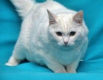 Thick white cat Stock Photo