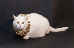 Thick white cat with yellow eyes sitting on black  Royalty Free Stock Images