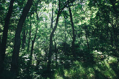 Thick woods