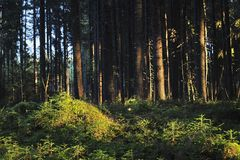 A thicket Royalty Free Stock Image