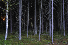 A thicket Royalty Free Stock Photos