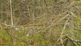 Thicket in the Forest. Autumn daytime. Smooth dolly shot stock video footage