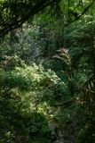 Thicket of dense green forest with parched stream royalty free stock photo