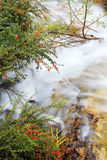Thicket and stream. In autumn. Jiuzhaigou. China stock photography