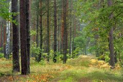 Thicket of trees and bushes of a natural forest in a summer. Season Royalty Free Stock Photos