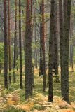 Thicket of trees and bushes of a natural forest. In a summer season in Kampinoski National Park in Poland Stock Photos