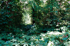 thicket in the woods Stock Photo