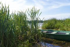 Thickets of cattail. Thickets of cattail, boat, river, cloudy sky and forest stock photo