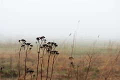 Thickets of grass in the fog in a vacant lot in the spring early in the morning. royalty free stock image
