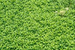 Thickets of grass on the river Bank stock photography