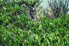 Thickets of green bush. royalty free stock images