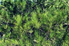 Thickets of green bush. stock photos