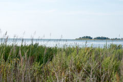Thickets Of Reeds And Chesapeake Bay On Maryland Eastern Shore Near Rock Hall, MD Royalty Free Stock Photography