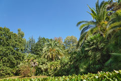 Thickets of subtropical palm trees in the old Park Stock Image