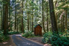 Thickly wooded Areas Around our Cabin Stock Photo