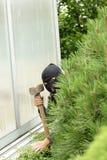 Thief in the garden Stock Photos
