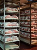 Raw ham during the salting process inside a refrigeration cell. Thighs of ham during the salting process inside a refrigeration cell Royalty Free Stock Images