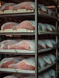 Raw ham during the salting process inside a refrigeration cell. Royalty Free Stock Image