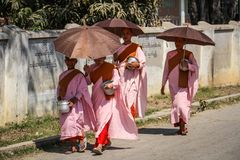 Thilashin walking with parasols in Nyaung Shwe,Inle Lake, Shan State. A Thilashin is a female lay renunciant in Buddhism in Myanmar. They are often mistakenly stock photo