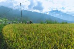 Thimphu, Bhutan - 15 settembre 2016: Giacimento del riso vicino a Thimphu, Bhutan Immagine Stock